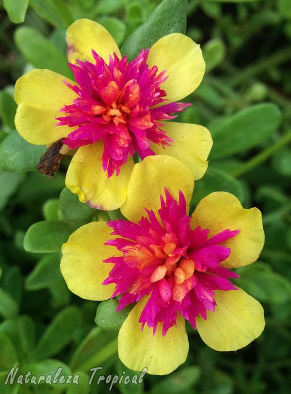 8 plantas que florecen todo el a o en macetas - Plantas exteriores todo el ano ...